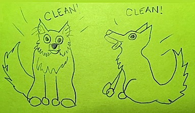 Clean Dogs